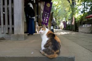 猫に出逢えるハッピースポット